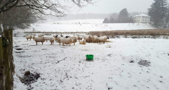 "Our ""neighbours"" need their woolly jumpers today!"