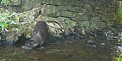 Otter at The Dulaig B&B, Grantown on Spey, Cairngorms National Park